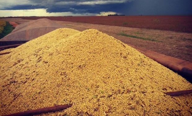 En Mato Grosso se recolectó un 16% de la oleaginosa.