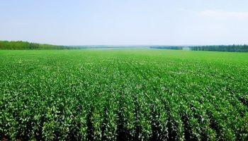 Conab estimó una mayor cosecha de soja en Brasil