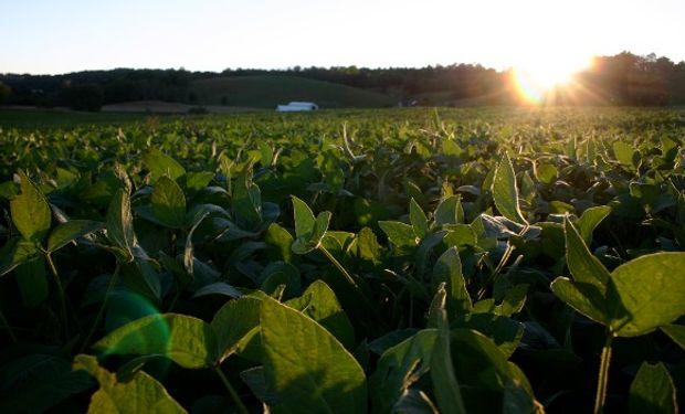 Buenas condiciones de la soja en EE.UU. presionan a la baja.