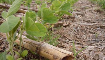 1.500.000 hectáreas de soja en el centro-norte de Santa Fe