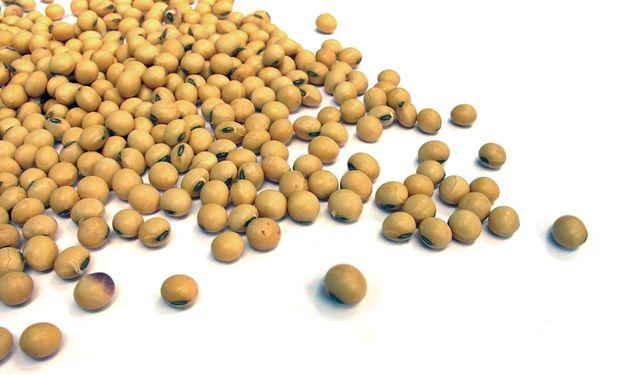 El precio de la soja en Rosario aumentó $200 la tonelada