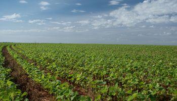 Sorpresa en mercados por mayor área de soja