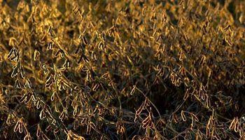 Chicago: la soja se dirige a un máximo de 9 meses