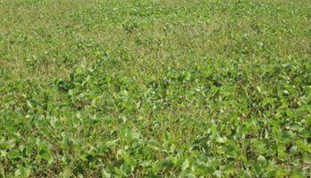 Se reanudaron los procesos de siembra y cosecha en Santa Fe