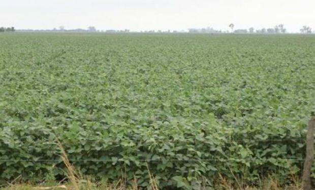 Lote de soja de primera, con muy buen desarrollo e uniformidad de lote del 100 %, en el centro oeste del departamento La Capital.-