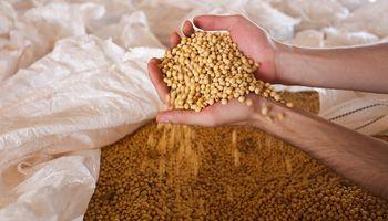 Brasil: la soja avanza en el estado de San Pablo y le gana hectáreas a la caña de azúcar