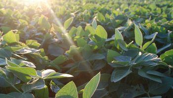 La soja comenzó la semana mayormente estable en Chicago
