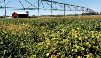El USDA dio a conocer la primer calificación de la soja norteamericana