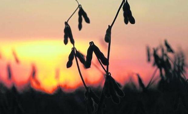 La tendencia de la soja cambió gracias a la demanda.