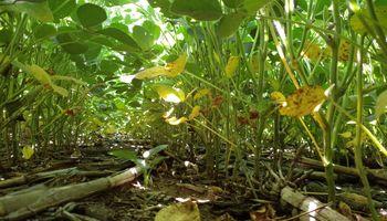 Las condiciones de sequía retroceden en buena parte de la región pampeana