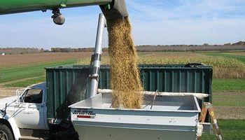Continúa atrasada la venta de soja