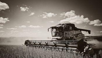 Poder adquisitivo de la soja local cayó al nivel de fin de los '90