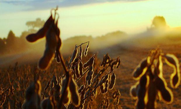 La producción agrícola sería beneficiada por este fenómeno en algunas zonas del mundo, como es el caso de la zona de producción de soja en los EEUU.