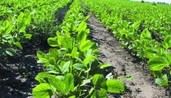 Estiman que precio de la soja será un 11% menor en 2016