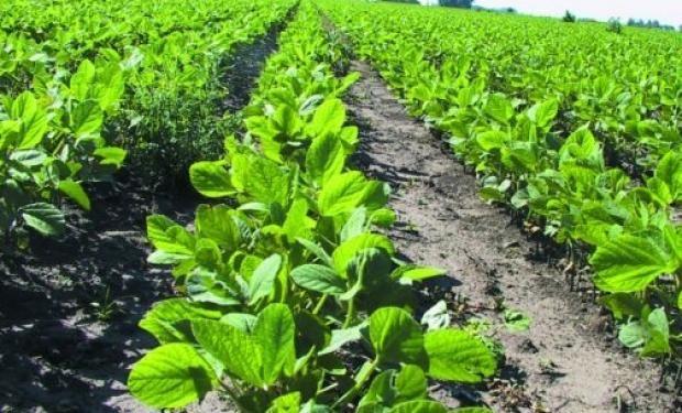 Estiman que el precio de la soja estará en 2016, en promedio, un 11% por debajo del registrado en 2015