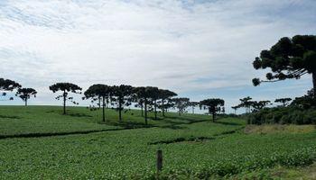 Brasil producirá 87,6 M de ton de soja
