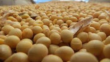 Distorsiones en el comercio de granos