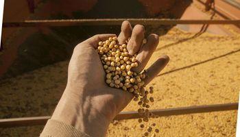 """Por qué es una """"media verdad"""" que hay US$ 9.000 millones de soja esperando"""