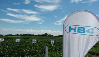 Soja y trigo HB4: para adaptar variedades, mapearán áreas propensas a ser afectadas por la sequía