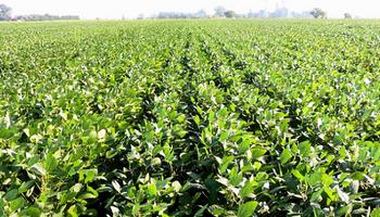 Alianza por los bioinsumos: dos líderes se unen para lanzar un innovador producto en la nueva campaña de soja