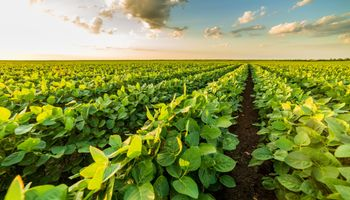 Soja: el primer herbicida triple mezcla que viene listo para usar ya está disponible en Argentina