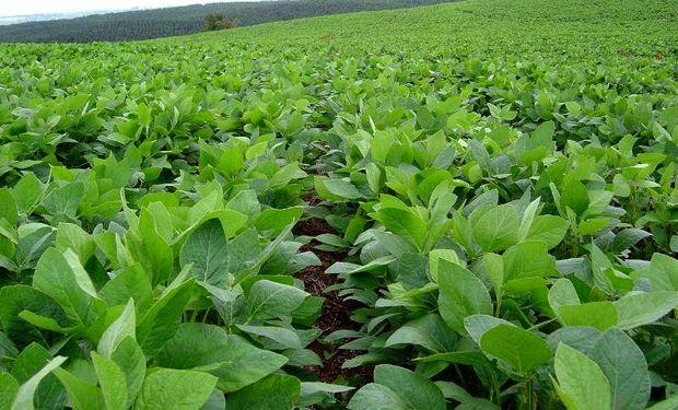 El titular de Casem consideró clave avanzar en medidas que alienten a la compra de semilla autógama fiscalizada.