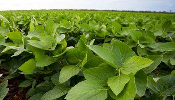 Monsanto flexibilizó el canon de su soja