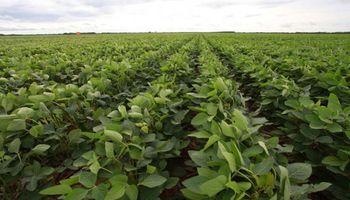 Soja: desestimaron un planteo judicial contra Monsanto