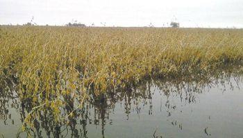 Las lluvias dejaron una pérdida de 2 millones de toneladas de soja en el Litoral