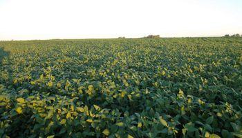 Se reduce el área implantada de soja debido a la falta de lluvias en algunas zonas