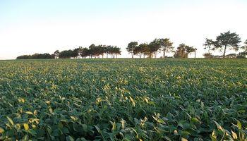 Recomiendan intensificar el monitoreo por lepidópteros en soja y maíz