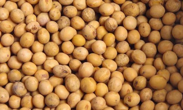 Presentarán el 17 de agosto la nueva ley de semillas.