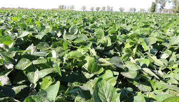 Por la ola de calor, se intensificaron los daños y el 30% de la soja está regular a mala en zona núcleo