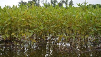 Avanzan las lluvias: en qué zona se esperan los máximos pluviales