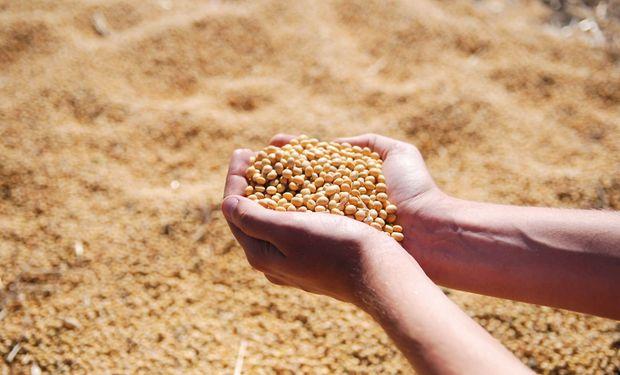 Soja y maíz: cómo impactó el rally alcista de Chicago en los precios locales