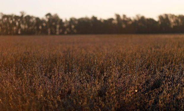 La soja sumó una nueva baja en medio de las lluvias que alcanzan a la Argentina y Brasil