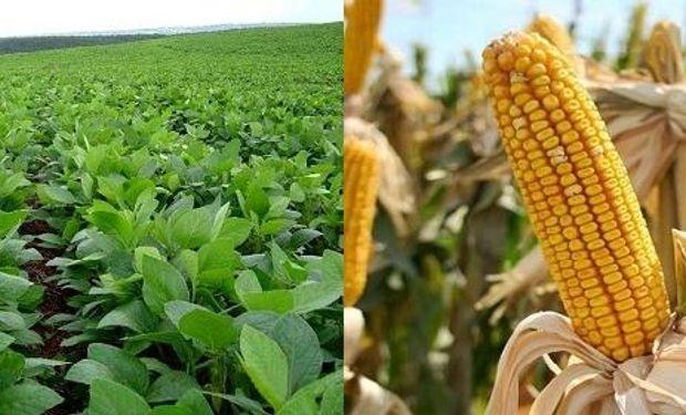 Soja y maíz con buena humedad.
