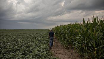 Subas en Chicago: Pro Farmer alejó las chances de una cosecha récord en Estados Unidos