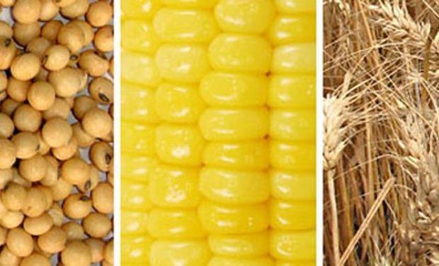 Chicago registró subas generalizadas en los futuros de soja, maíz y trigo