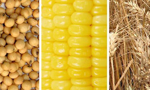 Hubo pérdidas para la soja, el maíz y el trigo en CBOT.