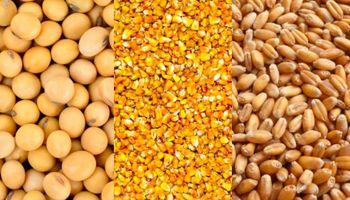 Soja, trigo y maíz: los factores que definen el precio y una recomendación de venta