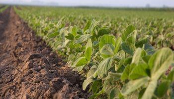 El clima pesa: mínimo de tres meses para la soja