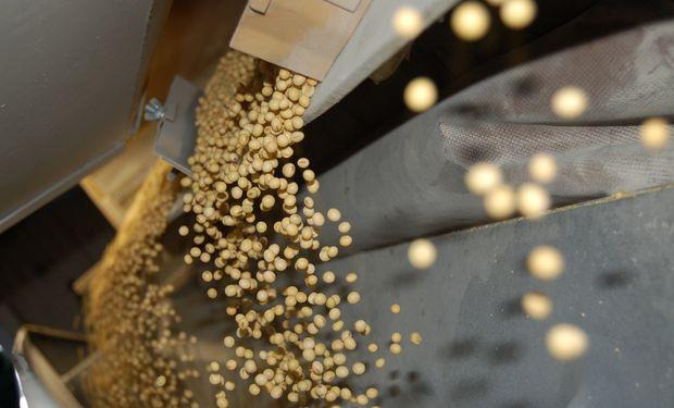 La cosecha argentina de soja 2014/15 podrían ingresar al mercado local a cuentagotas.