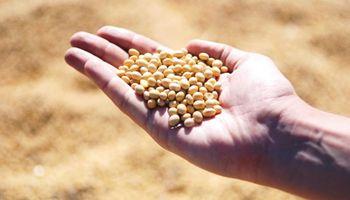 Cuánta soja está sin precio en el mercado de granos local