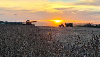 Récord: a qué precio venden la soja los productores en Brasil