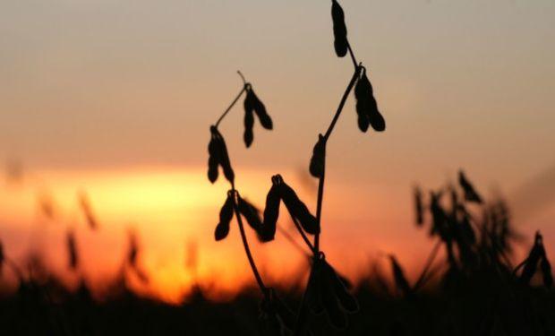 El apoyo adicional provino del clima húmedo en algunas zonas del Medio Oeste de los Estados Unidos que amenaza con retrasar la siembra.