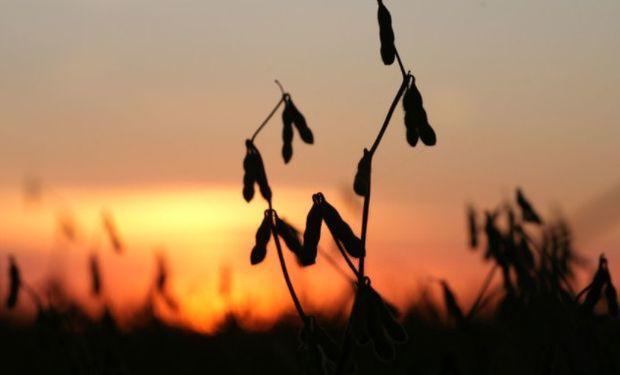 Nuevos negocios de la exportación impulsaron a la soja.