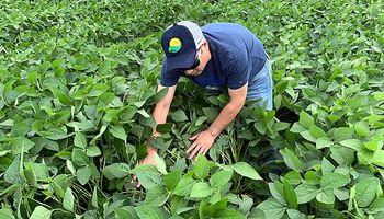 La siembra de soja en Brasil tendría el mayor crecimiento desde la campaña 2014/15