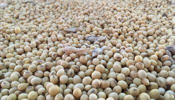 Apareció China para limitar la baja en el precio de la soja: cuánto se pagó en Rosario
