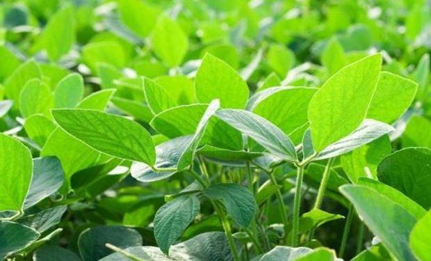 Bayer, más cerca de quedarse con Monsanto.